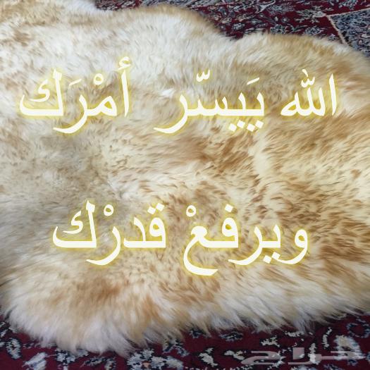 رد: مطوية (كيف يفلح قوم شَجُّوا نبيهم؟)