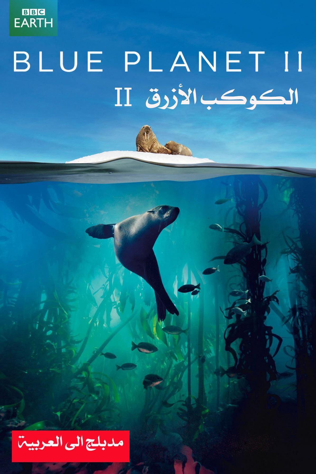 الكوكب الأزرق - الموسم الثاني  BBC Blue Planet II - ح1 - محيط واحد - تحميل تورنت 1 arabp2p.com